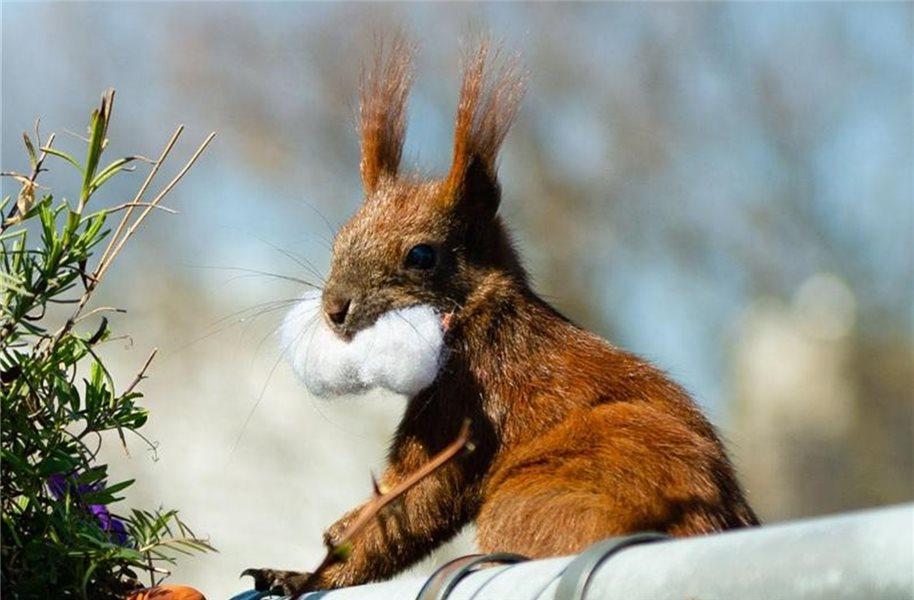 Wie Macht Das Eichhörnchen