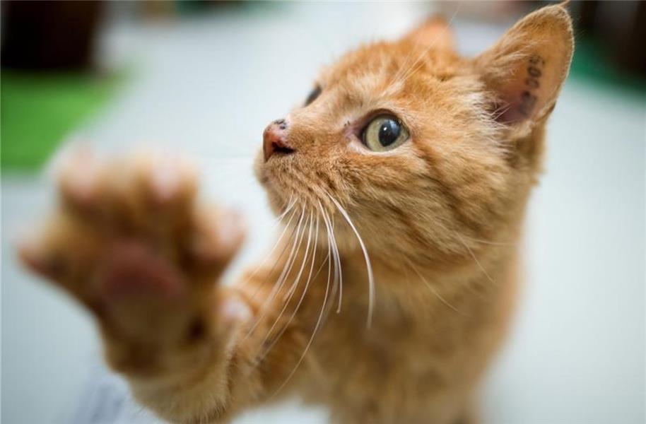Katzenallergie des Nachbarn nicht immer Grund für Verbot