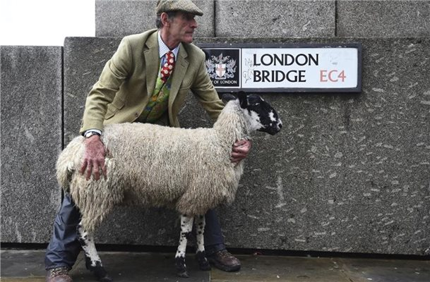 Ein Freeman mit Schaf auf der London Bridge. Foto: Kirsty O'connor/PA