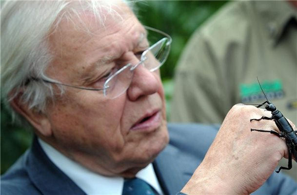 Im Original leiht David Attenborough der Doku seine Stimme. Foto: Joe Castro/EPA/AAP